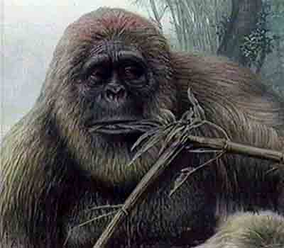 One interpretation of Gigantopithecus.