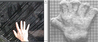 Figure 11. Beta print and the 1986 hand cast made by Paul Freeman (image reversed). The print and cast appear to have been made by hands of comparable size, near the maximum proposed for the sasquatch.