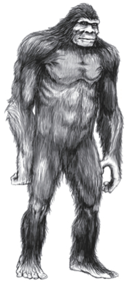 Sasquatch illustration by Pete Travers.
