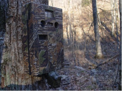 An Operation Forest Vigil camera trap keeps a watchful eye.