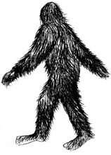 Eye witness sketch of bigfoot seen in Polk County, Texas.